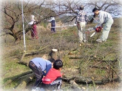 和歌山紀州の梅干作りは剪定から