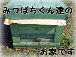 紀州の梅農家とともに働く蜜蜂くんのお家